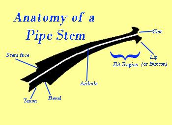 Anatomy of stem
